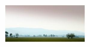 Yarra-Valley-Mist-3